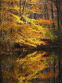 Fall reflection — Stock Photo