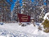 Winter in Carson National Forest — Stock fotografie