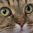 Cat close-up — Stockfoto