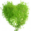 Herb in the form of heart — Stock Photo