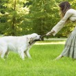 Girl with the golden retriever in the park — Stock Photo