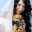 Stock Photo: Beautiful brunette bride with a dog