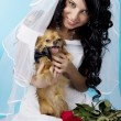 Beautiful brunette bride with a dog — Stock Photo
