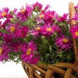 Basket of flowers — Stock Photo #7488749