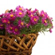 Foto Stock: Basket of flowers on white background