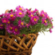 Foto de Stock  : Basket of flowers on white background