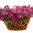 Stock Photo: Basket of flowers on white background