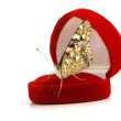 Butterfly sitting on a red gift box — Stok fotoğraf
