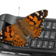 Butterfly sitting on a mobile phone — Stock Photo