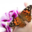 Butterfly sits in the hand — Stock Photo