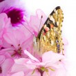 Butterfly sitting on flowers — Stockfoto #7489535