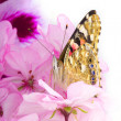 Butterfly sitting on flowers — Stock Photo #7489535