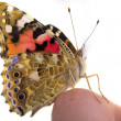Butterfly sits in the hand — Foto de Stock