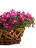 Basket of flowers on a white background — Stock Photo