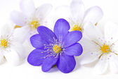 Abstract of several violet flowers. — 图库照片