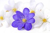 Sammanfattning av flera violetta blommor. — Stockfoto