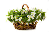Basket of white flowers — Stock Photo
