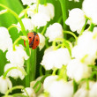Ladybird, which sits on lily of the valley - Stock Photo