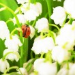 Stock Photo: Ladybird, which sits on lily of the valley