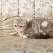 Stock Photo: Cat sitting on beautiful vintage couch