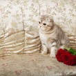 Cat sitting on a beautiful vintage couch — Stock Photo