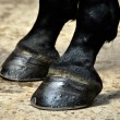 Horse Hoof - Hooves — Stock Photo