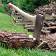 Wood Cutting - Axe Stuck in a Tree Log on Grass - Stock Photo