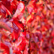 Stock Photo: Closeup on Fading Autumn Leaves. Shalow Focus
