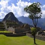 Tree on the Machu Picchu site with Huayna Peak — Stock Photo