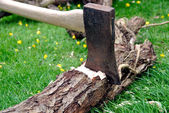 Wood Chopping - Lumberjack's Axe Stuck in a Tree — Stock Photo