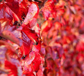 Closeup on Fading Autumn Leaves. Shalow Focus — Stock Photo