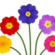 Colorful Primroses on Green Stick Isolated — Stock Photo