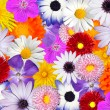 Multicolored Floral Background. Mix of Colorful flower heads — Stock Photo #7555546