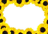 Fresh Sunflower Frame with White Background — Stock Photo