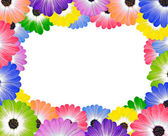 Colorful Daisy Flowers Around Edge of Frame — Stock Photo