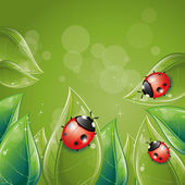Green leaves design with ladybug — Stock Vector