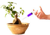 Syringe in bonsai — Stock Photo