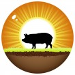Sunshine ball with pig — Stock Vector