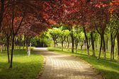 Pathway under the red maple leaves — Stock Photo