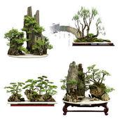 China bonsai — Stock Photo