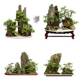 Collection of the best china bonsai with white isolated backgrou — Stock Photo