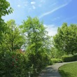 Winding Path through a Tranquil Verdant Garden — Stock Photo #7564622