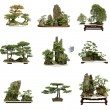 Stock Photo: Collection of best chinbonsai with white isolated backgrou