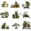 Collection of the best china bonsai with white isolated backgrou - Stock Photo