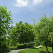 Winding Path through a Tranquil Verdant Garden — 图库照片
