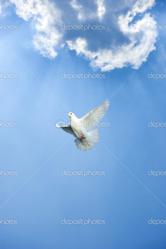 White dove in free flight under blue sky — Stock Photo #7776659