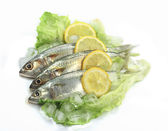 Mackerel with Lemon — Stock Photo