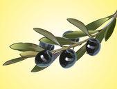 Olive branch — Stock Vector