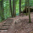 Old stone stair in the mystic woods — Foto Stock