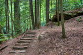 Old stone stair in the mystic woods — Stockfoto